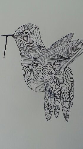 A bird from Kef's latest series of line drawings