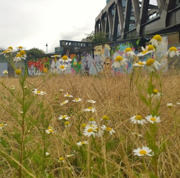 The walls of Pedley Street through the undergrowth