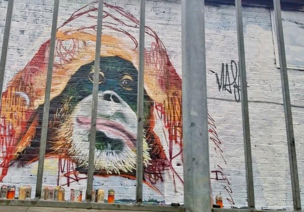Louis Masai Orangutan